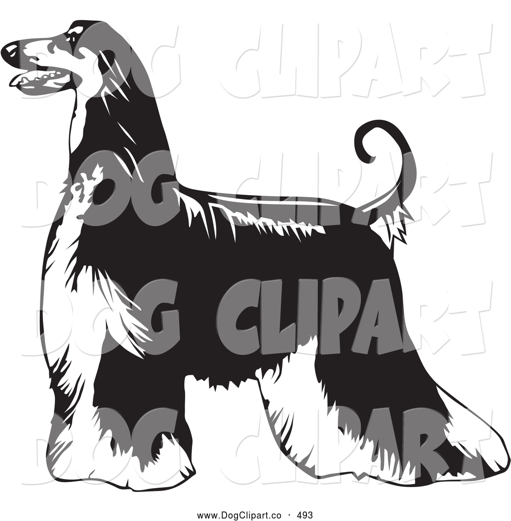 Vector Clip Art of a Cute Long Haired Afghan Hound Dog Standing ...