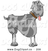 Clip Art of a Friendly Gra Great Dane Dog Hanging Its Tongue out on White by Djart