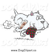 Vector Cartoon Clip Art of a White Terrier Dog Stealing Slippers and Running by Toonaday