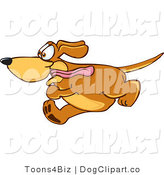 Vector Cartoon Clip Art of an Excited Brown Dog Mascot Cartoon Character Running Obsessively After Something by Toons4Biz
