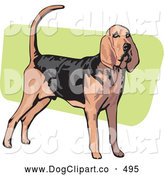 Vector Clip Art of a Alert Brown and Black Bloodhound Canine, Also Known As the St. Hubert Hound, Standing over a Green and White Background by David Rey