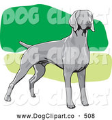 Vector Clip Art of a Alert Gray Weimaraner Canine Dog Facing Right, over a Green and White Background by David Rey
