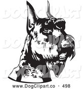 Vector Clip Art of a Alert Schnauzer Dog Canine with Cropped Ears, Facing Right, over a White Background by David Rey
