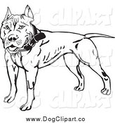 Vector Clip Art of a Black and White Pit Bull Terrier by Dennis Holmes Designs