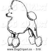 Vector Clip Art of a Black and White Sketch of a Fancy Toy Poodle Dog Standing in Profile, Facing Left, on a White Background by David Rey