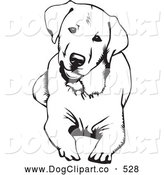 Vector Clip Art of a Cheerful Cute and Curious Labrador Retriever Dog Lying down and Tilting His Head, on a White Background by David Rey