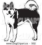 Vector Clip Art of a Cute Alert Akita Dog with a Curled Tail, Looking at the Viewer by David Rey