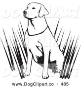 Vector Clip Art of a Cute and Alert Labrador Retriever Dog Hunting with His Master, Sitting in Tall Grasses and Waiting, on a White Background by David Rey