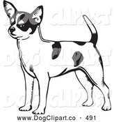 Vector Clip Art of a Cute and Alert Short Haired Chihuahua Dog with a Spotted Coat, Holding His Tail up and Facing Left, on a White Background by David Rey