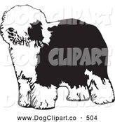 Vector Clip Art of a Cute and Hairy Dulux or Old English Sheepdog Standing and Facing Left, on a White Background by David Rey