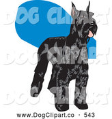 Vector Clip Art of a Cute Black Schnauzer Dog with a Shiny Coat, Standing and Facing Right by David Rey