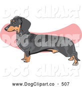 Vector Clip Art of a Cute Brown and Black Dachshund, Doxie, Dackel, or Teckel Dog over a Pink and White Background by David Rey