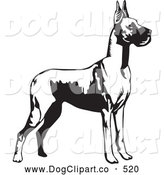 Vector Clip Art of a Cute Great Dane Dog with Cropped Ears, Standing Alert and Facing Right, over a White Background by David Rey