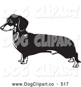 Vector Clip Art of a Cute Long Dachshund, Doxie, Dackel, or Teckel Dog on a White Background by David Rey