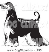 Vector Clip Art of a Cute Long Haired Afghan Hound Dog Standing Proudly in Profile, Facing to Left, over a White Background by David Rey