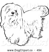 Vector Clip Art of a Cute Long Haired Maltese Dog Looking Upwards, on a White Background by David Rey