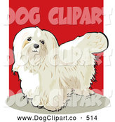 Vector Clip Art of a Cute Long Haired White Maltese Show Dog Looking Upwards by David Rey