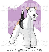 Vector Clip Art of a Cute Standing and Alert Wire Fox Terrier Dog with a White, Black and Brown Coat by David Rey