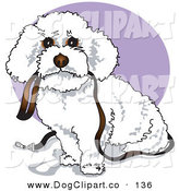 Vector Clip Art of a Cute White Bichon Frise Dog Carrying a Leash in Its Mouth and Begging to Be Walked on a Purple Circle by Andy Nortnik