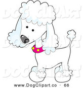 Vector Clip Art of a Cute White Poodle Puppy Dog Wearing a Pink Collar with Yellow Spots and Sporting a Puppy Clip on White by Maria Bell