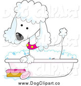 Vector Clip Art of a Cute White Poodle Taking a Sudsy Bubble Bath in a Tub by Maria Bell