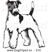 Vector Clip Art of a Cute Wire Fox Terrier Dog Standing on a White Background by David Rey