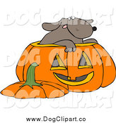 Vector Clip Art of a Dog in a Halloween Pumpkin by Djart