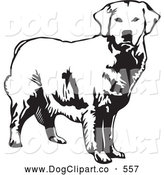 Vector Clip Art of a Friendly Alert Golden Retriever Dog Looking Forward, over a White Background by David Rey