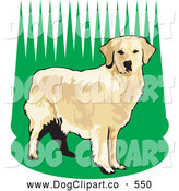 Vector Clip Art of a Friendly Alert Golden Retriever Dog Standing in Tall Green Grass, Waiting to Fetch While Hunting by David Rey