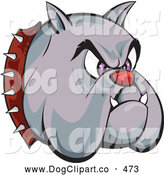 Vector Clip Art of a Frowning and Tough Bulldogs Head with a Red Nose, Purple Eyes, Fangs and a Spiked Collar, over a White Background by Paulo Resende