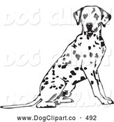 Vector Clip Art of a Happy and Alert Spotted Dalmation, or Dalmatian, Dog Seated with Its Body Facing Right, Looking at the Viewer by David Rey