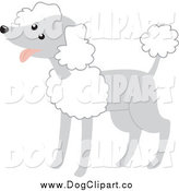 Vector Clip Art of a Happy Gray and White Poodle by Rosie Piter