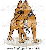 Vector Clip Art of a Mean Brown American Pitbull Terrier Dog with Red Eyes, Wearing a Spiked Collar and a Broken Chain by Andy Nortnik