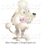 Vector Clip Art of a Pampered White Female Poodle Dog with a Pink Collar, Sitting and Sporting the Pompoms of the Continental Clip in a Dog Show by AtStockIllustration