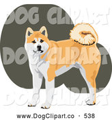 Vector Clip Art of a Smiling Alert Tan and White Akita Dog with a Curly Tail, Looking at the Viewer by David Rey
