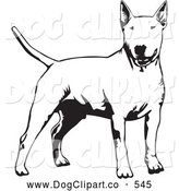 Vector Clip Art of a Stern Alert Bull Terrier Dog Holdings Its Tail out and Facing Front, on a White Background by David Rey