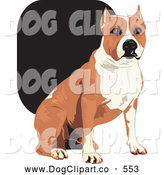 Vector Clip Art of a Tan and White American Staffordshire Terrier Dog Sitting and Looking Forward, on White by David Rey