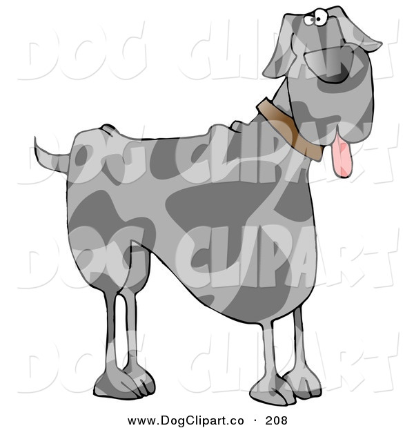 Clip Art of a Friendly Gra Great Dane Dog Hanging Its Tongue out on White