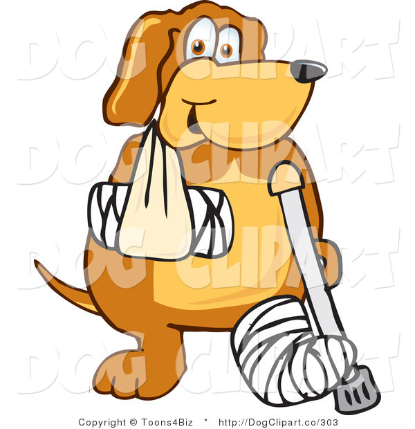 Vector Cartoon Clip Art of an Injured Brown Dog Mascot Cartoon Character with an Arm and Leg Bandaged After an Accident