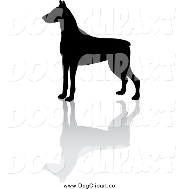 Vector Clip Art of a Black Silhouetted Doberman Pinscher Dog and Reflection