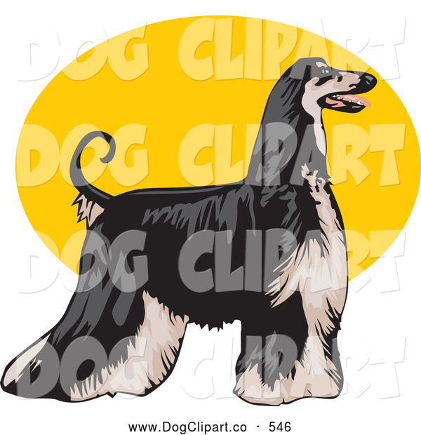 Vector Clip Art of a Cute Long Haired Afghan Hound Dog, Standing Proudly in Profile, Facing to the Right over a Yellow Oval on a White Background