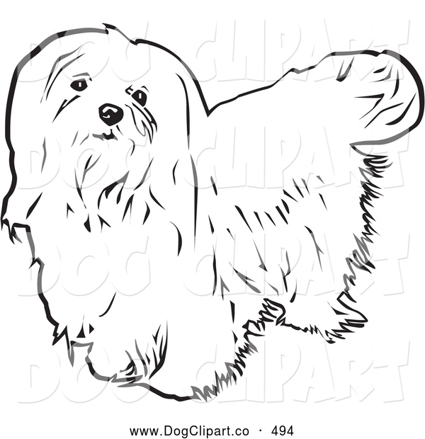 maltese dog clipart - photo #15