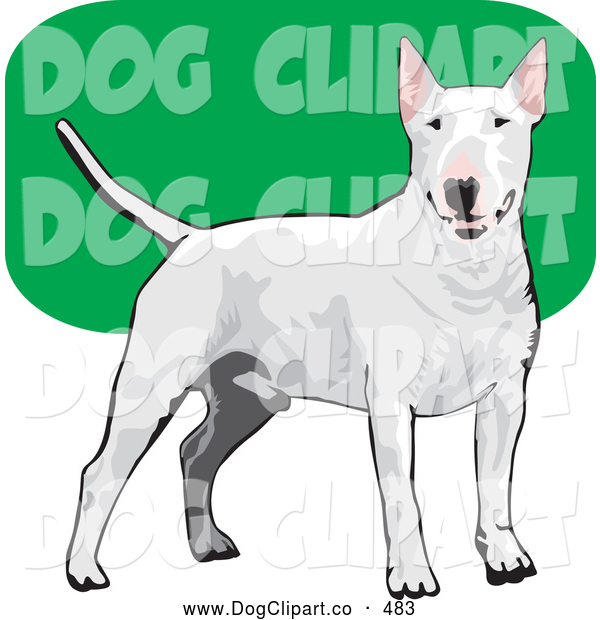 Vector Clip Art of a Friendly White Bull Terrier Canine Dog Wagging Its Tail and Facing Front over a Green and White Background