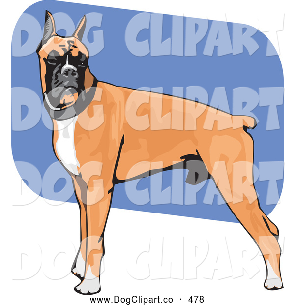 Vector Clip Art of a Muscular Brown, White and Black Boxer Dog Canine Standing with His Body in Profile, His Head Facing Front