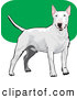 Vector Clip Art of a Friendly White Bull Terrier Canine Dog Wagging Its Tail and Facing Front over a Green and White Background by David Rey
