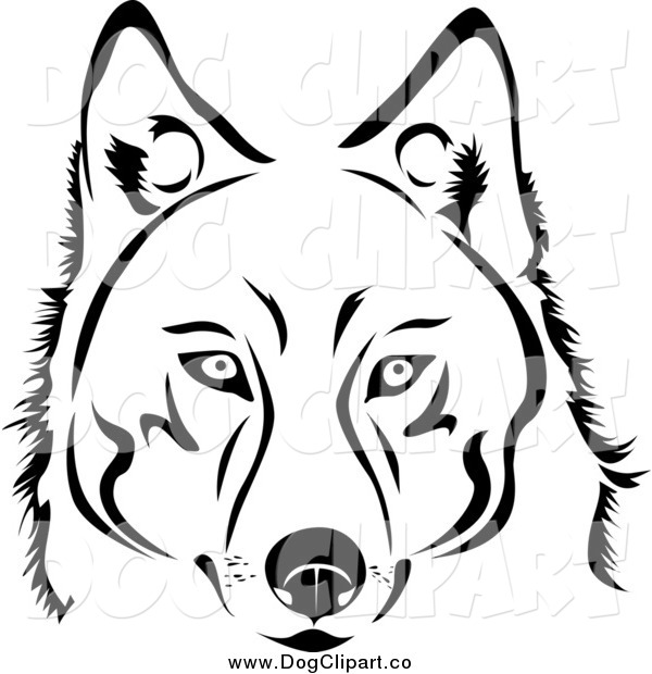 Vector Clip Art Of A Face Of A Black And White Husky Dog By Vector
